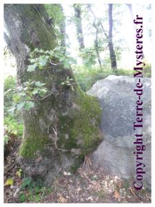 Roches qui dansent Saint Barthelemy de Vals, roches et arbres se mélangent
